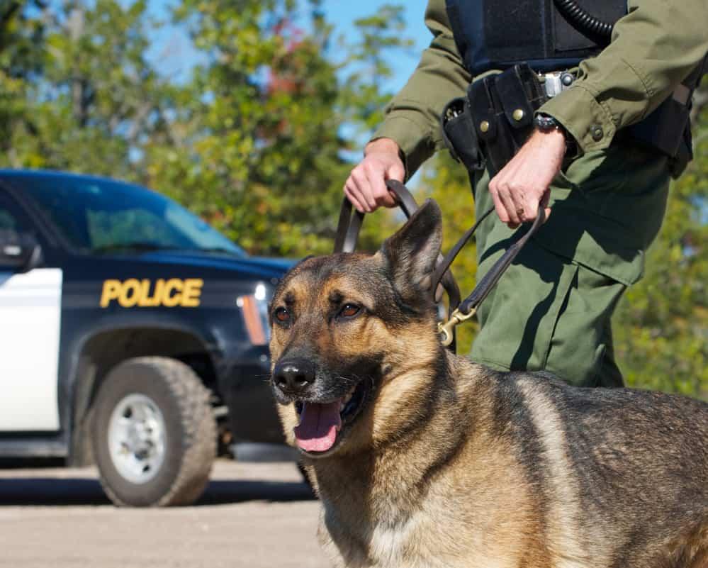 drug sniffing dog traffic stop